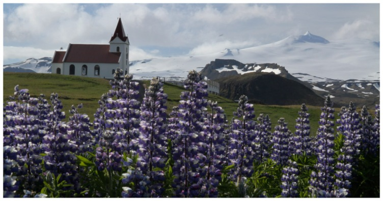 Lupines with Church