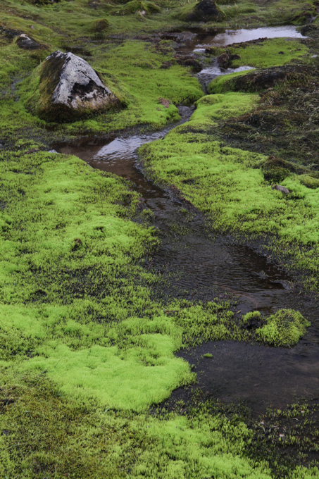 This moss along the trail was neon green. It was hard to believe that its color actually exists in nature.