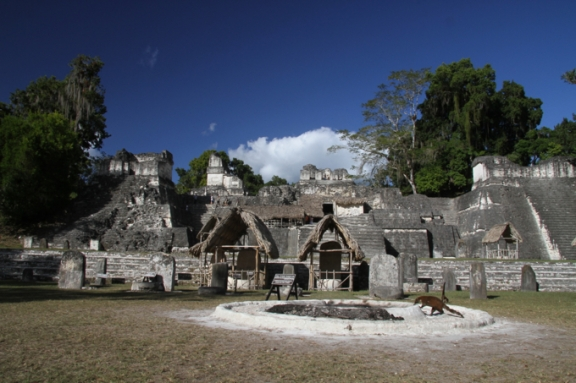 The Grand Plaza is the heart  of Tikal. Check out the roaming koati mundi!