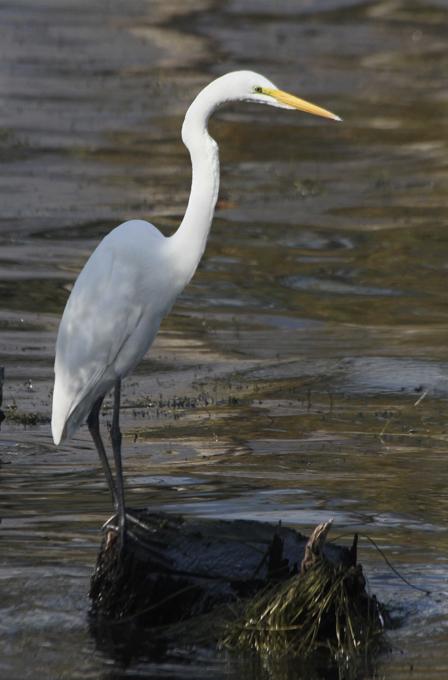 An abundance of birdlife lives on the lake, including this heron.