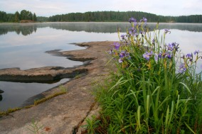 Irises on Lake 4_Horizontal