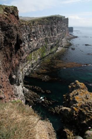 Látrabjarg Bird Cliffs