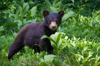 Baby Bear at Mystic Lake Camp