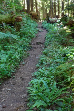 Old Growth Forest Trail