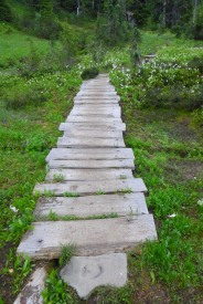 Wooden Foot Path in Seattle Park