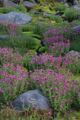 Peak Bloom at Summerland