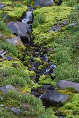 Summerland Stream