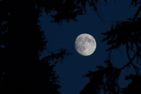 Super Moon at Summerland