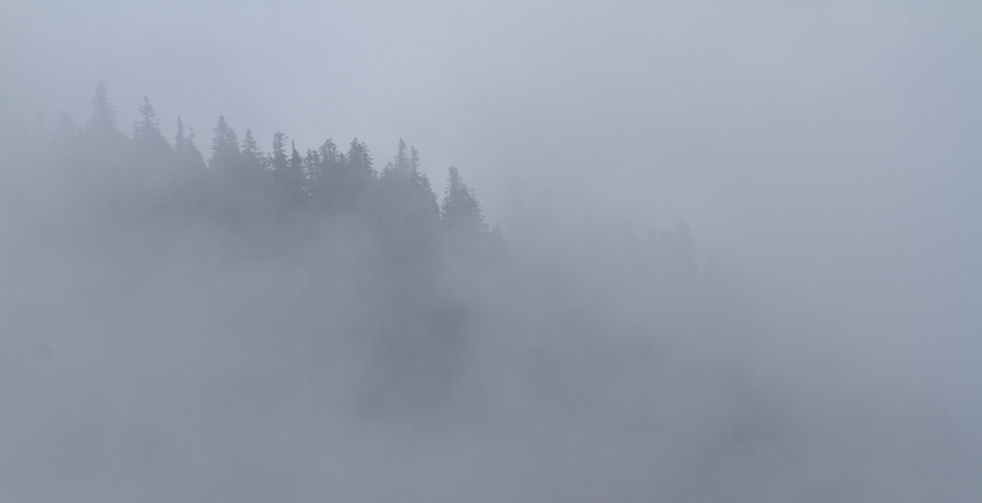 Foggy Morning on Rainier