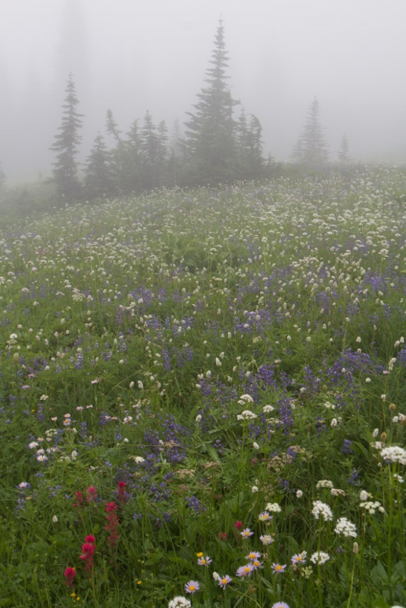 Meadows with Fog