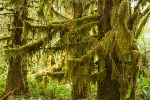 Festooned in Moss