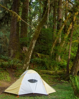 Hoh Rainforest Campsite