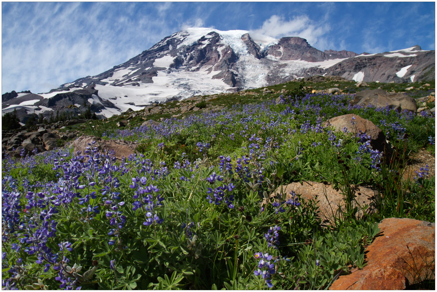 Rainier with Lupine