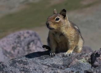 Cute Critter