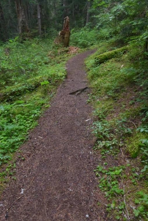 The Trail up to Narada Falls
