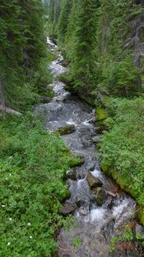 Trailside Stream