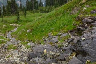 Meadows above Indian Bar