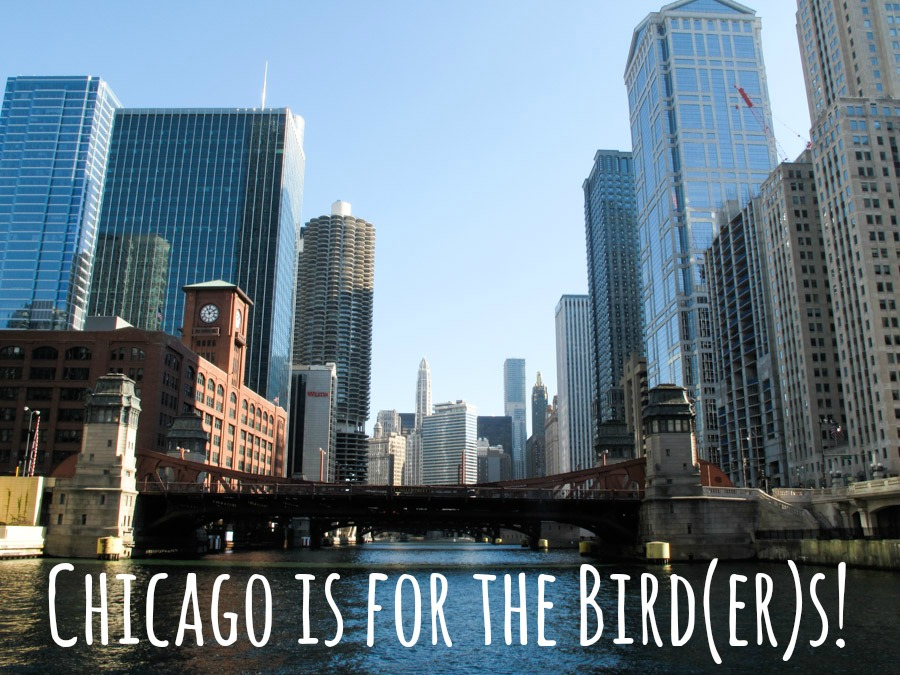 Chicago for the Birders2