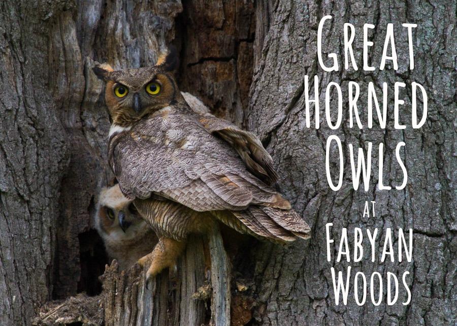 Fabyan Woods